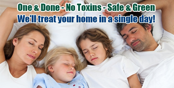 Bed-Bug-Treatment-Services-One-Day-NJ-NYC