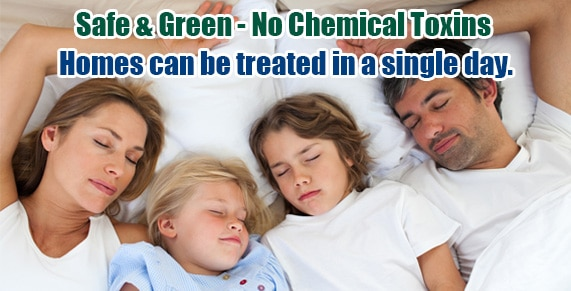Non-toxic Bed Bug treatment NJ, bugs in bed NJ, kill Bed Bugs NJ