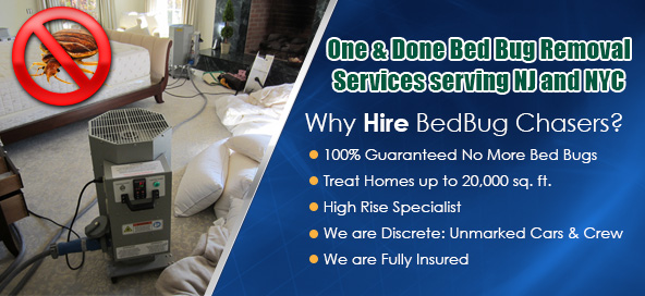 Bed Bug heat treatment NJ, Bed Bug images NJ, Bed Bug exterminator NJ, NJ Bed Bug Exterminator